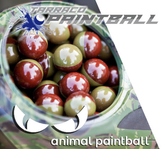 Distribuïdor de boles Tarraco paintball